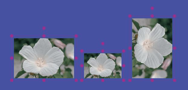 画像の移動、拡大・縮小