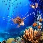 DigiFish Aqua Real 2 <アクアリアル> (ダウンロード版)