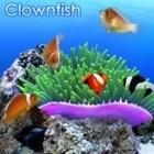 DigiFish ClownFish <クラウンフィッシュ> (ダウンロード版)