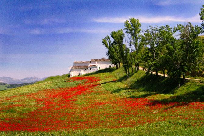exposure-6-examples-Landscape-GAF-500-Warm-669x446.jpg