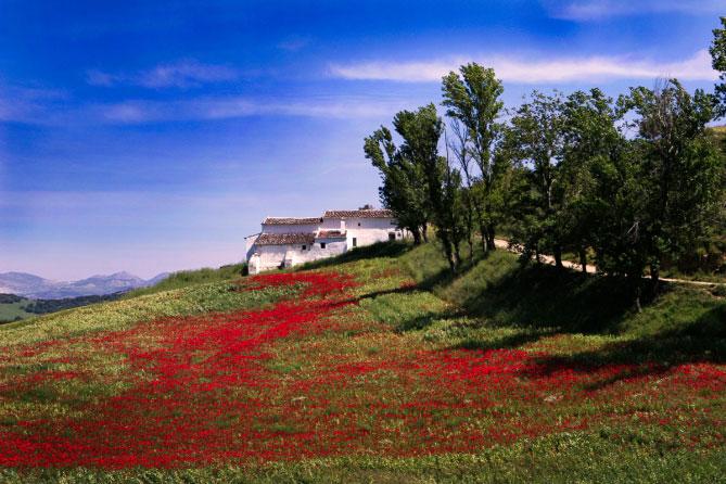 exposure-6-examples-Landscape-Kodak-Ektar-100-669x446.jpg