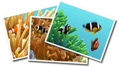 熱帯の珊瑚礁の代表 - クマノミ